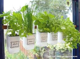Window Sill Herb Garden Designs Window Sill Herb Garden Kit Hanging Milk Jugs Used As A Bottle
