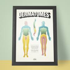 Maps Pain Clinic 100 Dermatomes Map Myotomes Chart Admissions Guide Image045