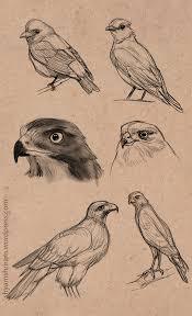 bird sketches 01