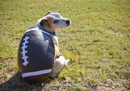 halloween costumes georgia jack russell rescue adoption and
