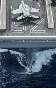 confessions of a us navy ea 18g growler electronic warfare officer