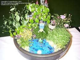 Mini Rock Garden Japanese Mini Garden Mini Rock Garden Mini Garden Design Ideas