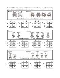 genotypes and punnett square worksheets by haney science  tpt with genotypes and punnett square worksheets from teacherspayteacherscom
