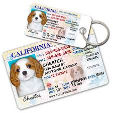 california driver license custom tags for pets 2