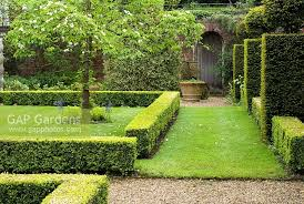 Yew Topiary - gap gardens buxus box and taxus baccata yew topiary hedging
