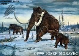 google image result http www prehistory dinosaurs woolym