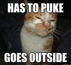Cat Trap Meme - no pain in the butt cat memes 20 pics izismile com