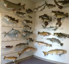 joy roman the name in fish taxidermy home facebook