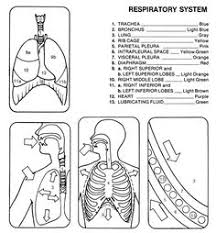 my first human body book dover publications coloring pages first