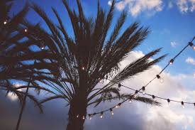 free picture palm tree silhouette string lights sky