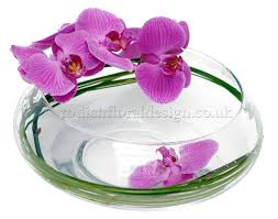 Orchid Delivery Purple Passion Tender Loving Care To Your Purple Orchid Plant