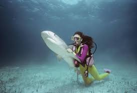 Job Description For A Marine Biologist Top Six Wildlife Careers That Earn More Than 50 000