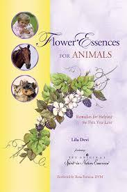when a pet dies chapter 7 when a pet dies spirit in nature flower essences