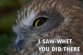 Owl Memes - wildlife memes owls canadian mutt