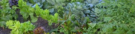 planting a fall vegetable garden greenville county parks