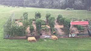 garden trellis and fence co youtube