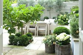 small flowering trees for small gardens flowering trees small