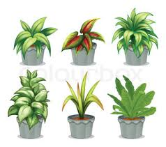 six non flowering plants stock vector colourbox