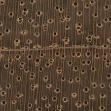 balsa endgrain 10x wood types species wood database
