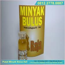 Minyak Bulus Asli Papua minyak bulus papua jual minyak bulus di malang minyak bulus asli