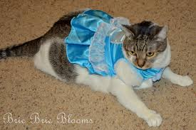 Pet Cat Halloween Costumes How To Get Your Sassy Cat Into A Halloween Costume Brie Brie Blooms