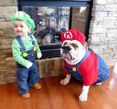 Halloween Funny Costumes 240 Cute Pet Costumes Images Animals Animal