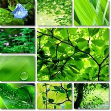 Colour Shades 71 Best Colour Inspiration Green Images On Pinterest Nature
