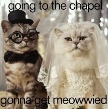 Wedding Day Meme - book of weddings bookofweddings twitter