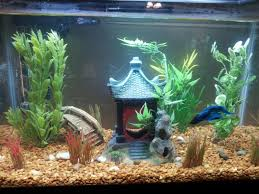 betta fish tank decorations Try Out Fish Tank Decorations – Room
