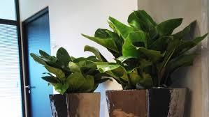 plantes bureau des plantes de bureau bénéfiques green inside