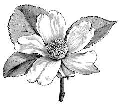 black and white flower images collection 59
