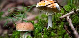 K Hen Schweiz 20 Minuten Erst Vier Prozent Aller Pilze Sind Bekannt News