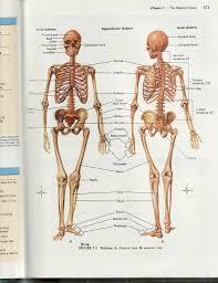 Human Anatomy Skeleton Diagram Human Head Anatomy Bones Detailed Human Skeleton Diagram Human