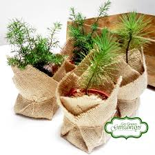 pine tree seedlings go green giveaways