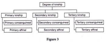 Types Meaning Kinship Meaning Types And Other Details