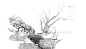 drawing of a forest u2013 jacob yona design