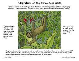 Adaptations Of Tropical Rainforest Plants - a tropical rainforest thinglink