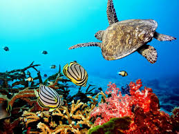 awesome ocean pictures wallpaper 1280x720 coral reef idolza