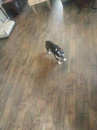 hton bay country oak dusk laminate floor for the home