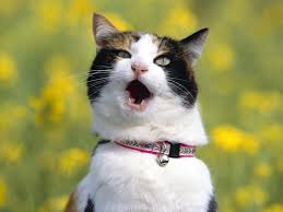 Omg Cat Meme - image 69583 omg cat know your meme