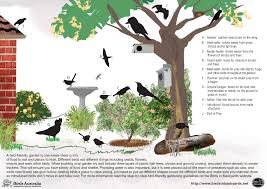 Birds In Your Backyard Birds In Your Garden Image Birds In Backyards