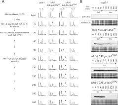 cdc6 atpase activity disengages cdc6 from the pre replicative