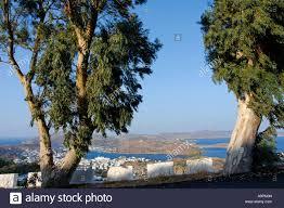 skala and eucalyptus trees patmos greece stock photo royalty