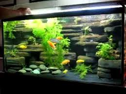 Fish Tank Decor Ideas RVC Designs