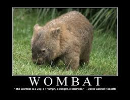 Wombat Memes - wombat meme via v w animals pinterest meme and animal