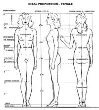 Female Anatomy Reference Anatomy Reference Polycount