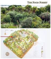 1608 best permaculture images on pinterest permaculture