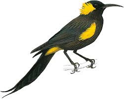 10 amazing birds that have gone extinct birdlife