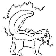 skunk feel threatened coloring color luna