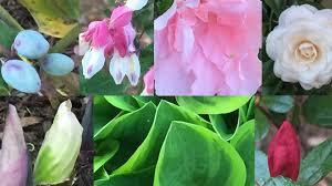 spring archives botanical beauties u0026 beasties